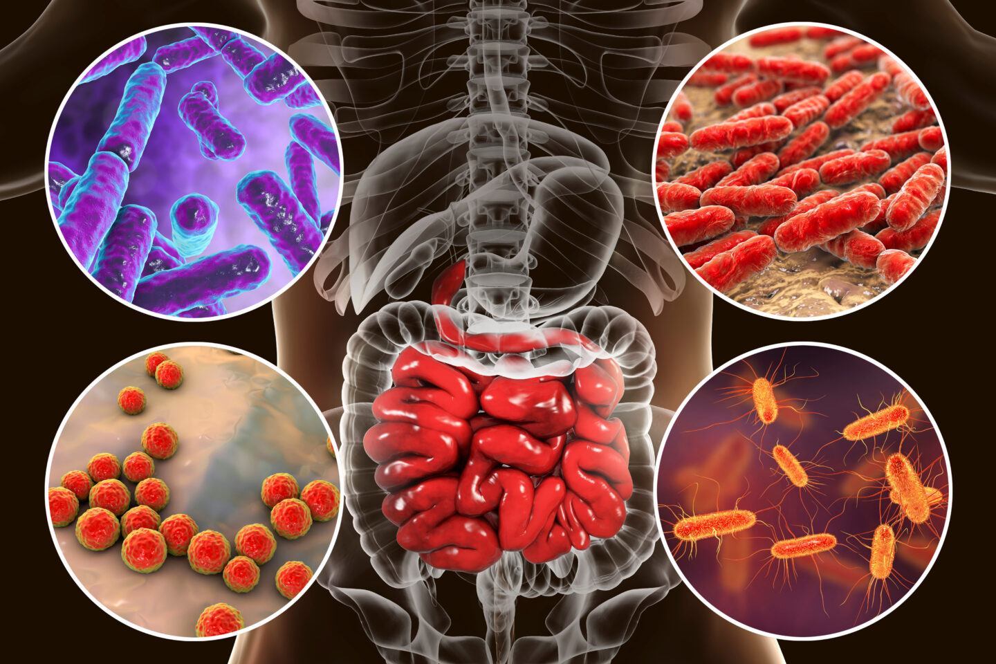 What Is the Significance of the Human Microbiota?